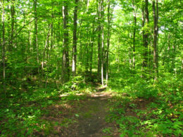Click the photo to link over to the Image Slider page where you can view a series of photos of the Bruce Trail.