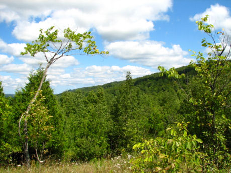 A scene from the beautiful Beaver Valley section of the Bruce Trail.
