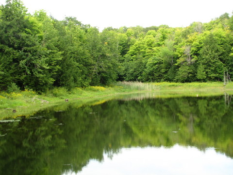 A pond scene from the Blue Mountains section of the Bruce Trail in Pretty River Park.