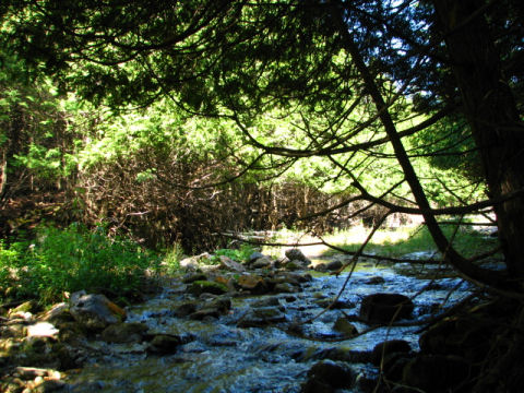 A scene from the beautiful Beaver Valley section of the Bruce Trail near Hoggs Falls.