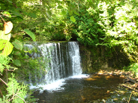 A scene from the beautiful Beaver Valley section of the Bruce Trail at Hoggs Falls.