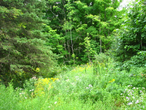 A foliage scene from the Blue Mountains section of the Bruce Trail in Pretty River Park.